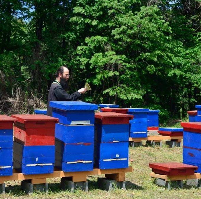 Благосиљање манастирског пчелињака