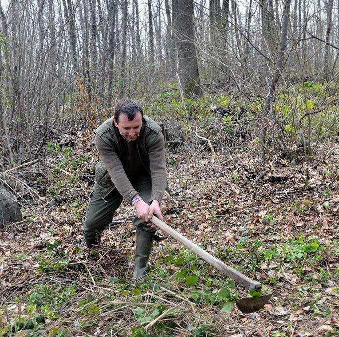 Пошумљавање шумског комплекса манастира Буково