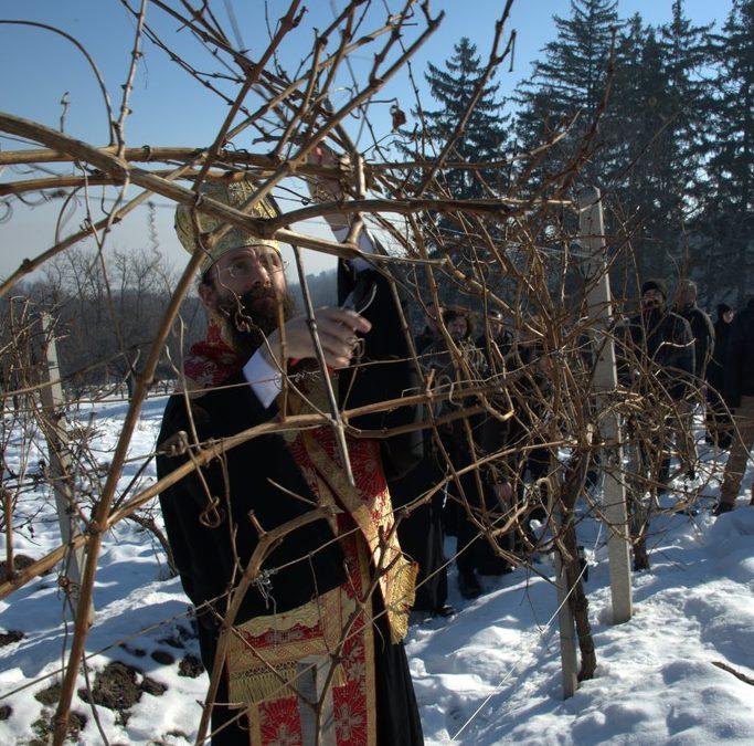 Свети Трифун слава винара и виноградара