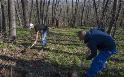 Подмлађивање манастирских шума